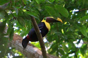 زیباترین جزایر و سواحل در پاناما