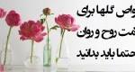 خواص گلها برای سلامت روح و روان
