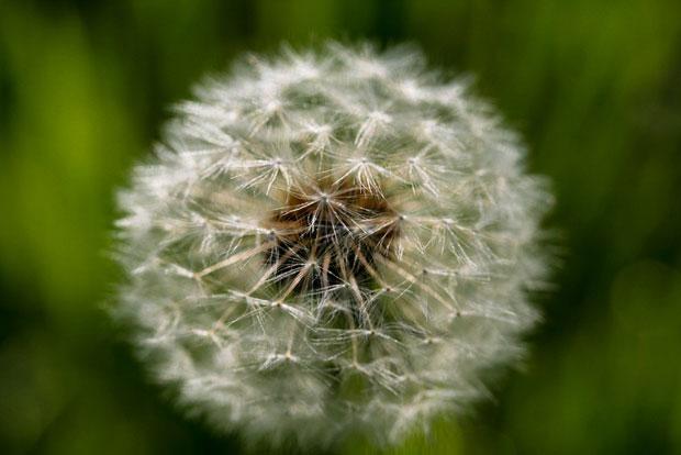 آلرژی فصلی seasonal-allergies