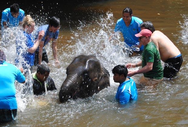 جاهای دیدنی کوالالامپور,پناهگاه فیل کوالاگاندا-kuala_gandah_elephant_sanctuary