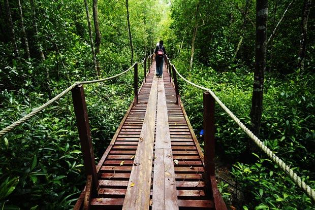 جاهای دیدنی کوالالامپور,پارک طبیعی کوالا سلانگور-Kuala-Selangor-Nature-Park