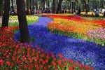 زیباترین مزارع گل دنیا را بشناسید+عکس