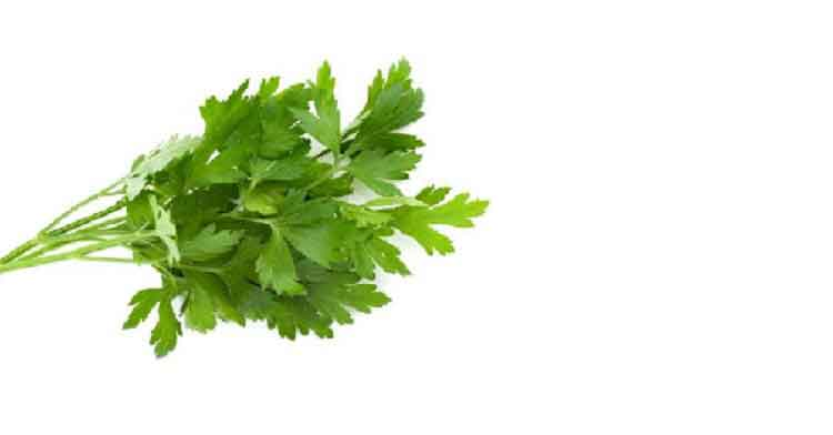 Parsley amazing benefits