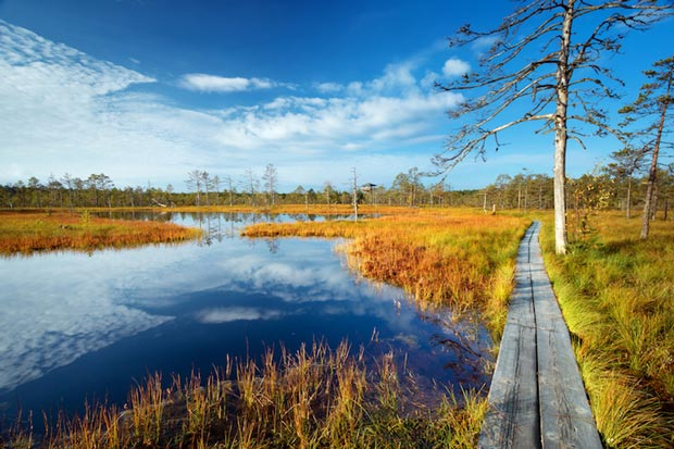 پارک ملی-lahemaa_national_park