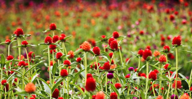 بهترین راه درمان آلرژی فصلی
