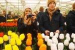 گل های لاله؛ بهترین دیدنیهای آمستردام