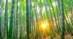 گیاهان تزیینی با رشد سریع