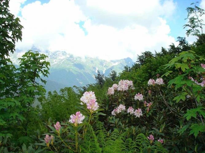 دخیره گاه طبیعت قفقاز-Caucasus-Nature-Biosphere-Reserve