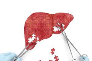 کبد liver