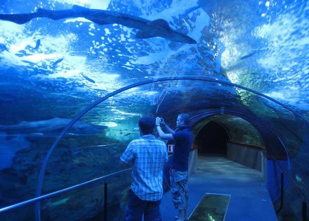 جاهای دیدنی سن سباستین اسپانیا,آکواریوم دونوستیا-سن سباستین-aquarium_donostia_san_sebastian