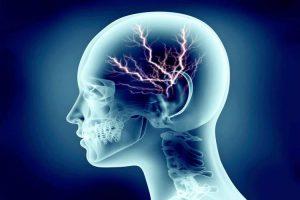 humans-have-big-brains درباره مغز انسان