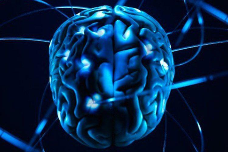 humans-have-big-brains درمورد مغز آدم