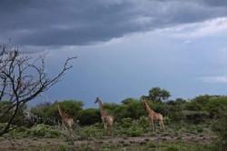 نامیبیا کجاست و چرا به آن سفر کنیم؟