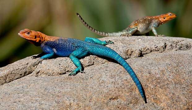 تعبیر خواب مارمولک lizard