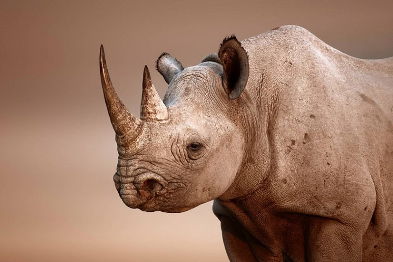 تعبیر خواب کرگدن rhino