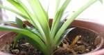 مزایای وجود گیاهان در منزل