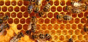 تعبیر خواب زنبور bees