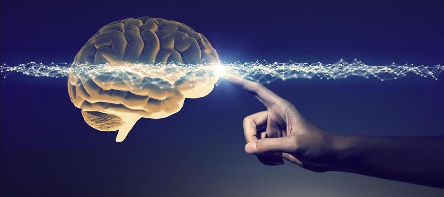 دانستنی درمورد مغزbrain