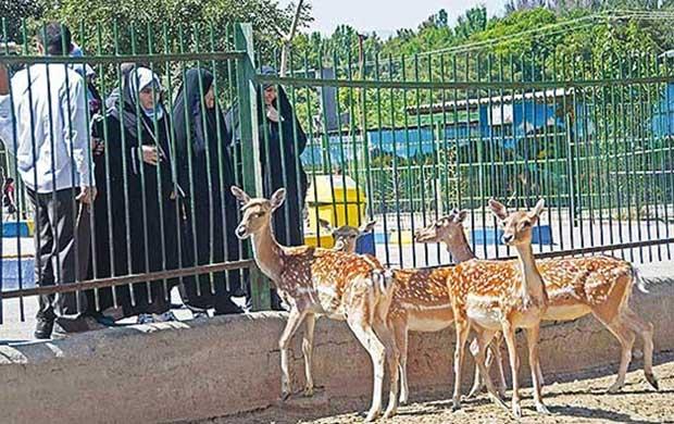 mashhad-zoo باغ وحش مشهد