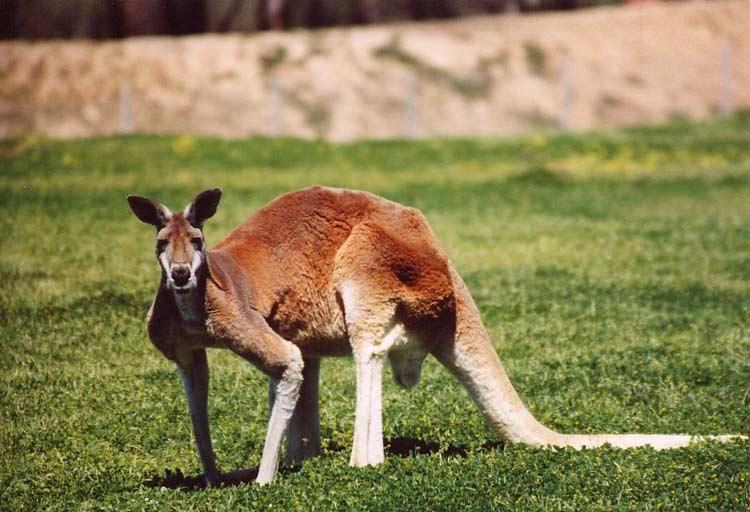 دانستنی درباره استرالیا