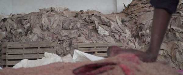 صادرات خر به چین,خرید و فروش پوست الاغ