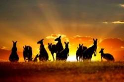 حیوانات کمیاب در استرالیا