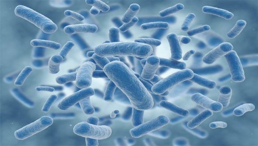 bacterias درباره باکتریها