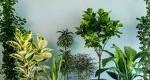 بهترین گیاهان آپارتمانی با نور کم