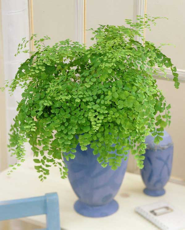 plants-to-grow-indoors پرسیاوش