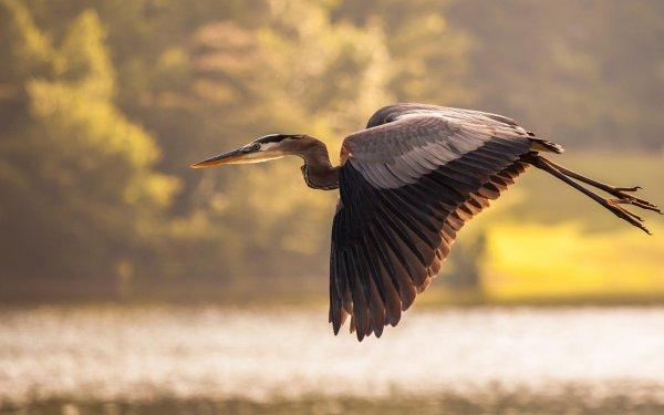 دانستنی درمورد پرندگان