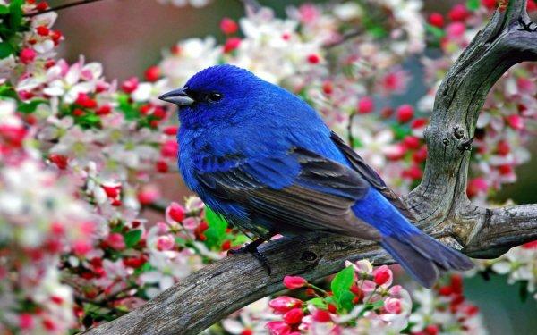در مورد پرندگان