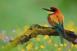 دانستنی هایی در مورد پرندگان