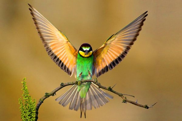 دانستنی درمورد پرنده