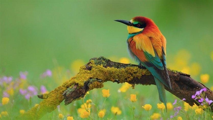دانستنی در مورد پرندگان