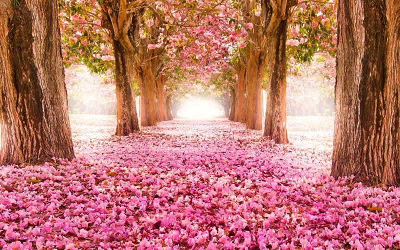 شعر کوتاه فصل بهار و عید نوروز