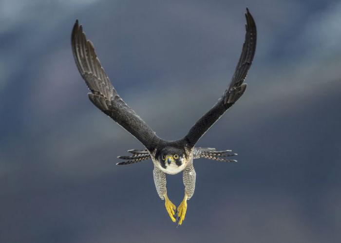سریع ترین موجودان جهان,پرسرعت ترین حیوان دنیا