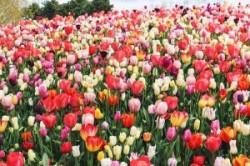اشعار زیبای بهاری و عید نوروز
