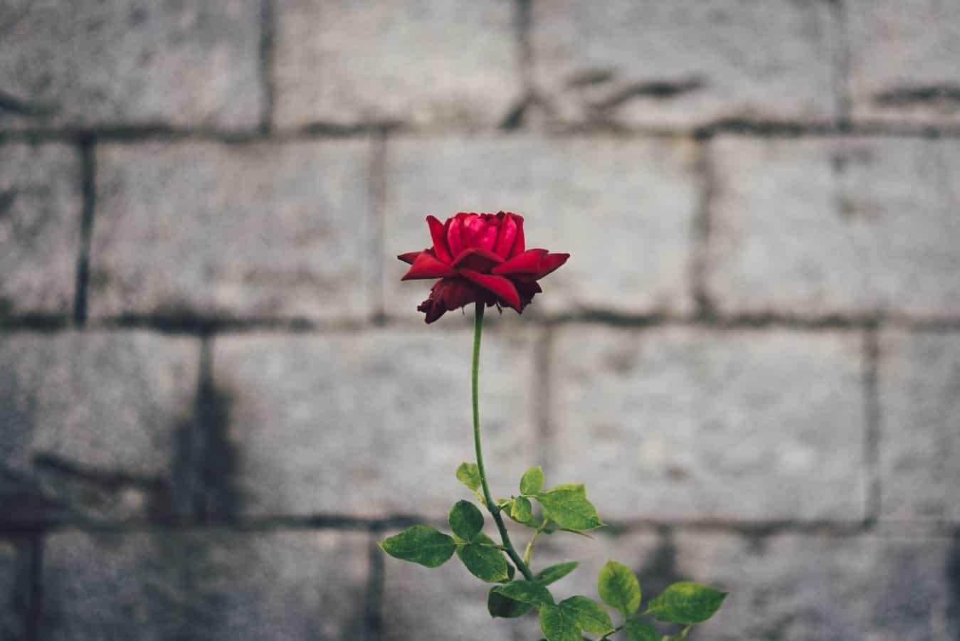 انعطاف پذیری عاطفی