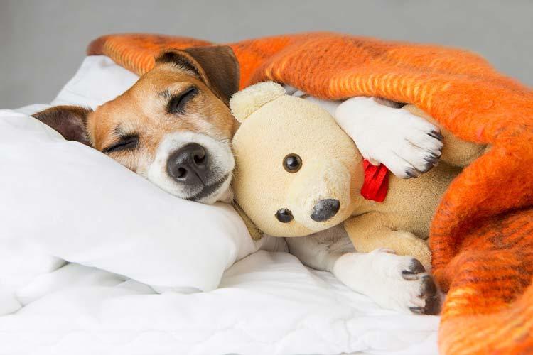 خواب کافی درمان التهاب