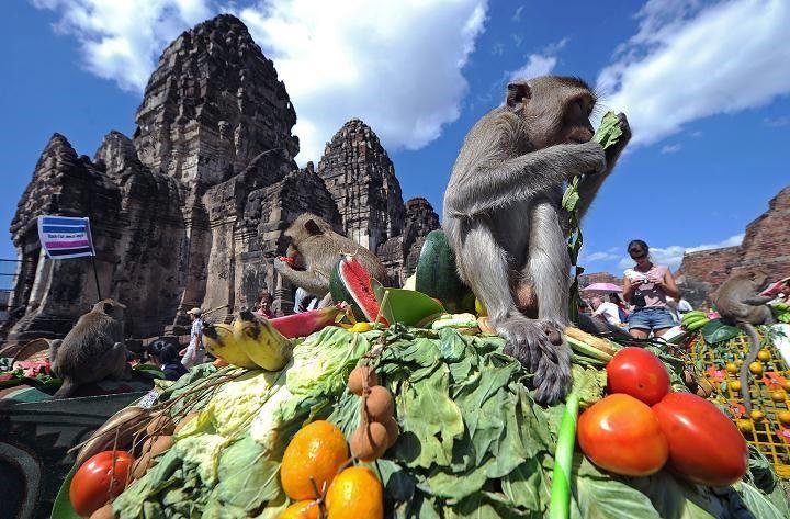 برگزاری جشنی عجیب برای میمون ها در تایلند
