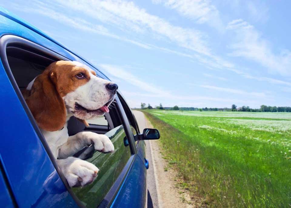 تاکسی حیوانات چیست؟