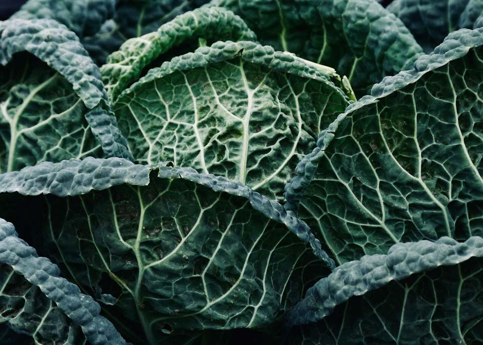سبزی با رشد سریع,کلم پیچ