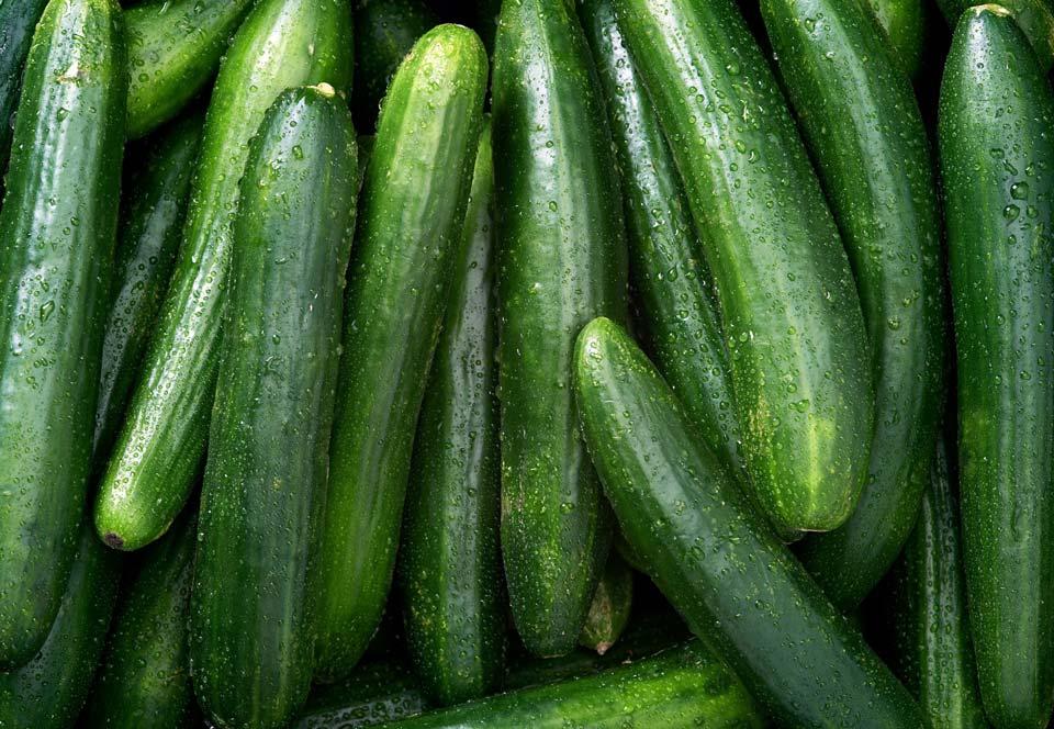 سبزی با رشد سریع,خیار