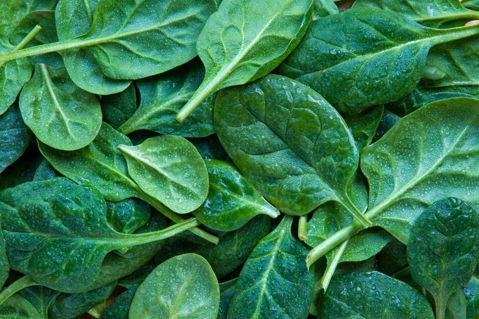 سبزی با رشد سریع,اسفناج