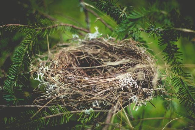 دیدن لانه پرندگان و حیوانات وحشی در خواب