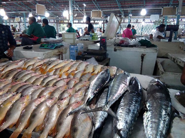 بازدید از بازار ماهی فروشان در تور کیش