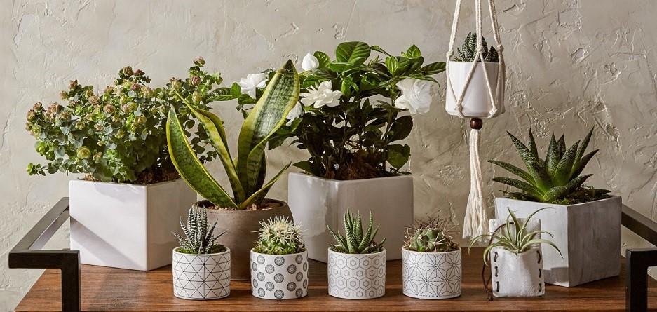17 گیاه آپارتمانی که حشرات را از خانه شما دور خواهند کرد